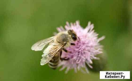 Избавлю от пчел,сниму рой Ярославль