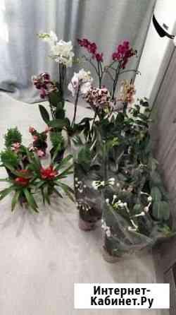 Цветы Курган