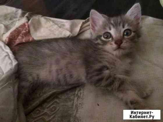 Котёнок Екатеринбург