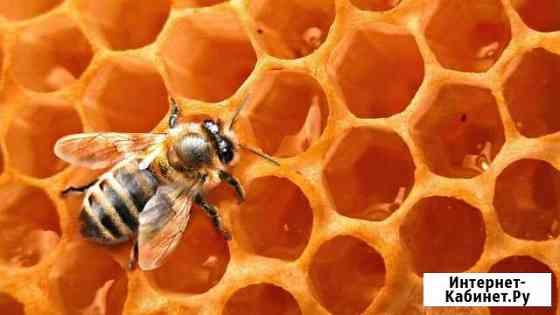 Подам пчел Десногорск