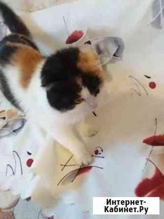 Продаются котята Рязань