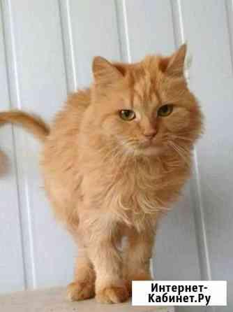 Кошка в добрые руки Тольятти