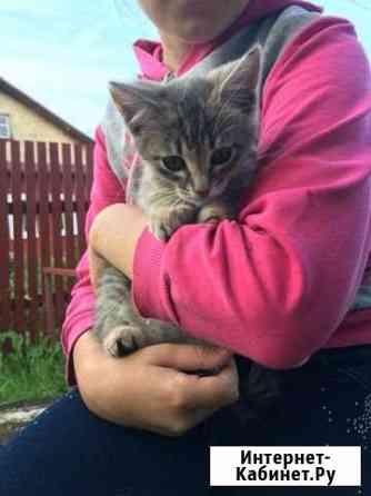 Котик девочка 1 месяц Фурманов