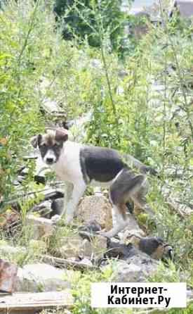 Ищет дом щенок не крупной собачки Габби Санкт-Петербург