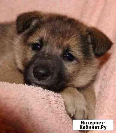 Собака Бутурлиновка