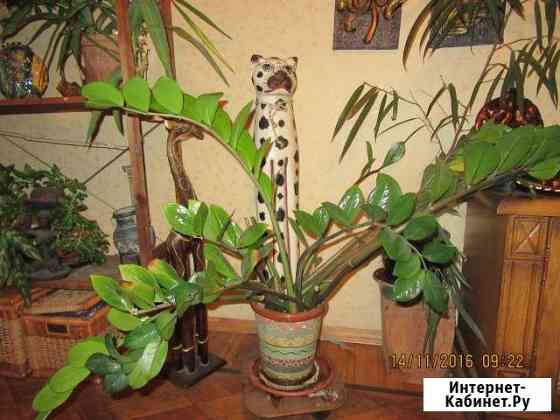 Декоративное красивое растение Москва