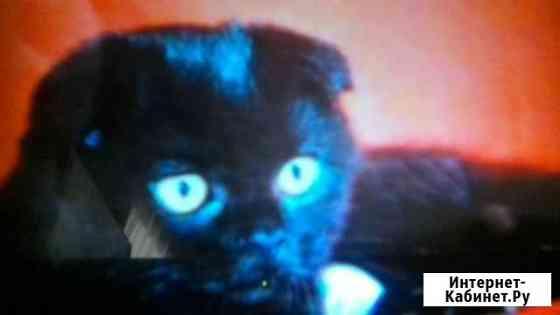 Вислоухий мальчик 2 месяца,черный Пятигорск