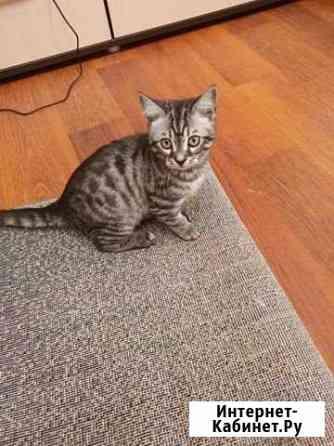 Кошка Тюмень