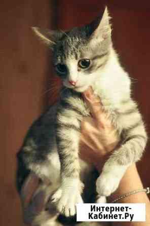 Кошачий ребенок Матроскин Тольятти