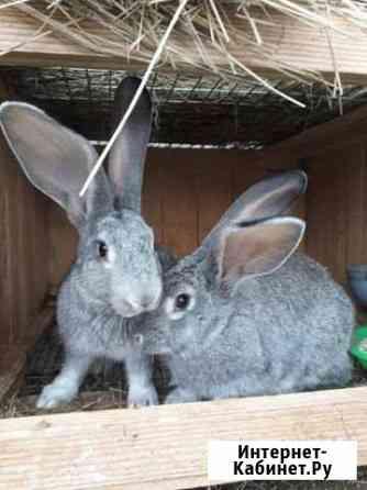 Кролики Минусинск