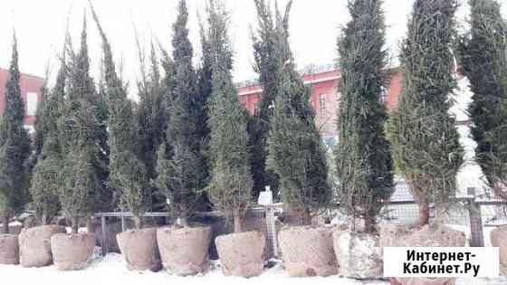 Деревья Крупномеры Омск