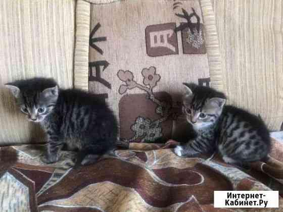 Кошка Магнитогорск