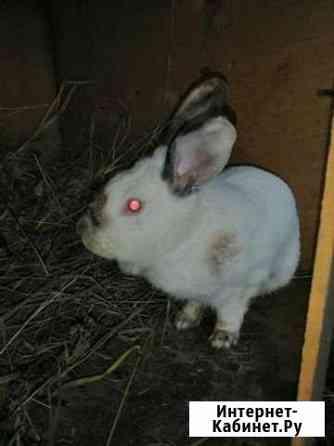 Кролик Челябинск
