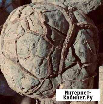 Септарии Нальчик