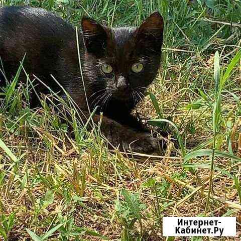 Котенок мальчик Иркутск