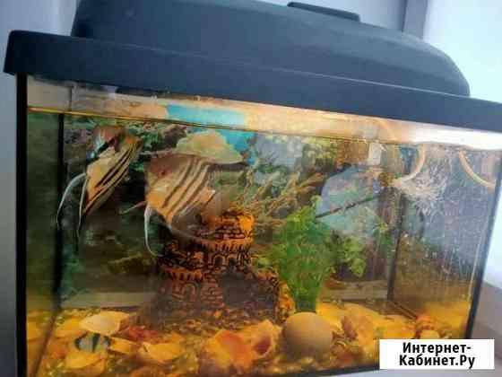 Аквариум с рыбками Курган