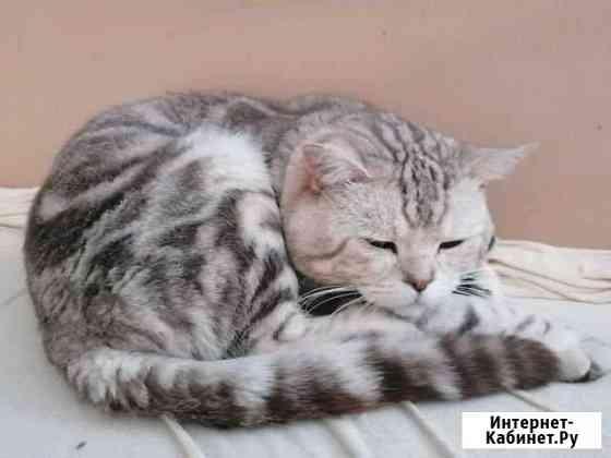 Кот на вязку Йошкар-Ола