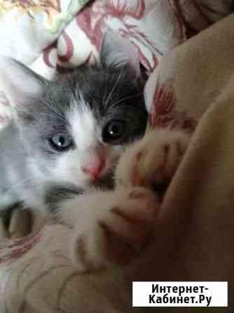 Кошки Чебоксары