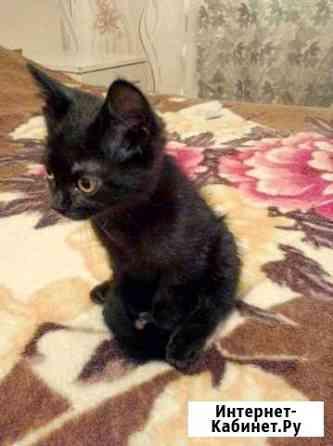 Кошка Камень-на-Оби