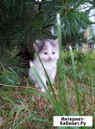 Котята от кошки кротоловки Ярославль