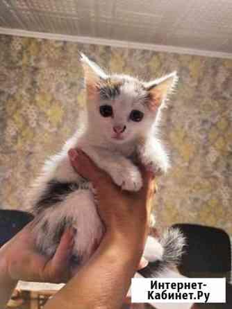 Котёнок Новосибирск
