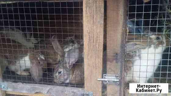Кролики Мариинский Посад