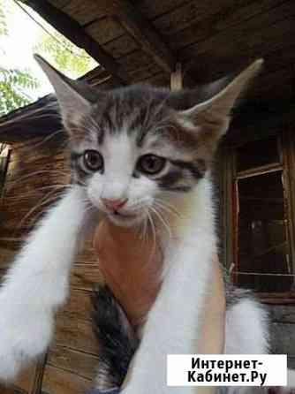 Пасхальный кот-котенок мальчик здоровый домашний Астрахань