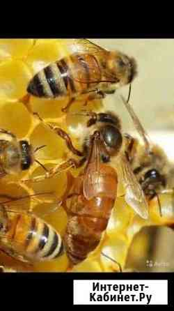 Продажа пчёл и мёда Бахчисарай