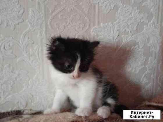 Кошка Тамбов
