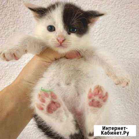 Коты в добрые руки Санкт-Петербург
