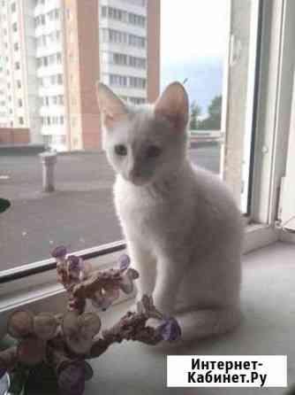 Котёнок Серпухов