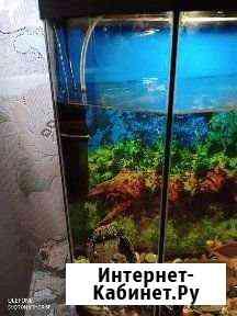 Аквариум Киров