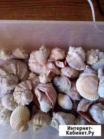 Морские ракушки для аквариума или для интерьера Магнитогорск