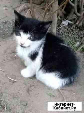 Отдам котят Калининград