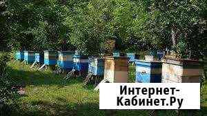 Продаю пчёл Усть-Ордынский