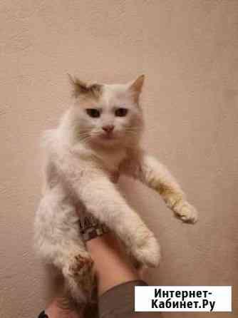 Кошка Батайск