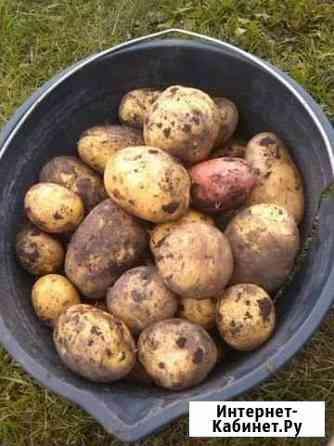 Картофель домашний Тюмень