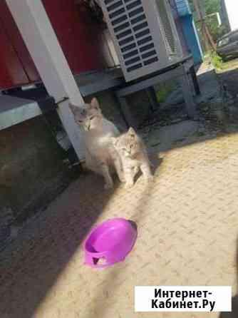 Кошка с котёнком Брянск