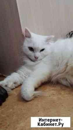 Отдам кошку в добрые ручки Красноярск