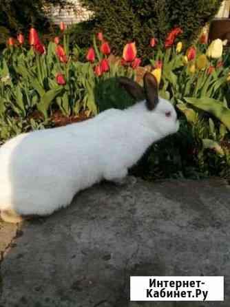 Кролики Каменск-Шахтинский
