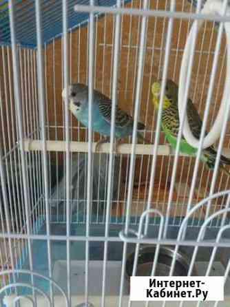 Попугайчики +клетка+корм Арзамас