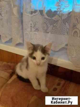 Отдам бесплатно котяток (кошечки) в добрые руки Новосибирск