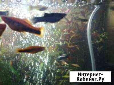 Рыбки,растения Воронеж