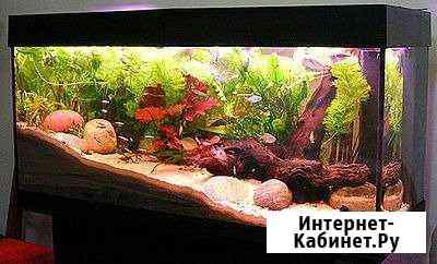 Аквариумы Рыбкинhouse Астрахань