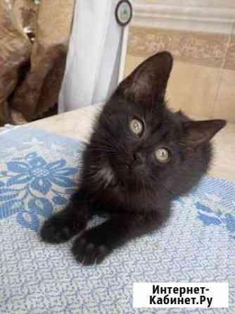 Черный котенок (кошка) Ярославль