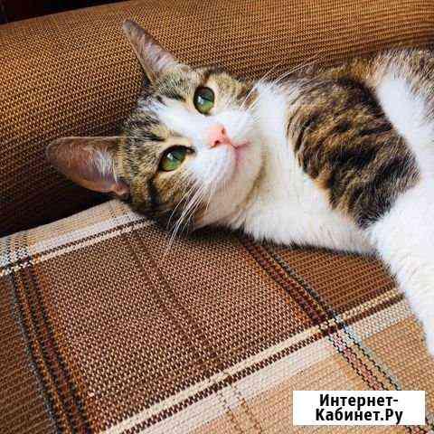 Кошка Ульяновск