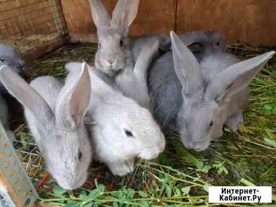 Кролик Тверь