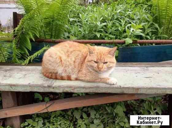 Котик ищет дом Ярославль