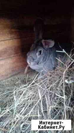 Кролики Исетское