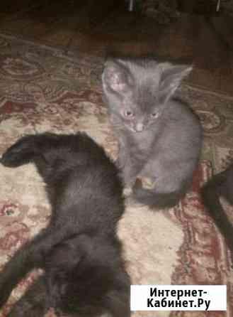 Котята в добрые руки Энгельс